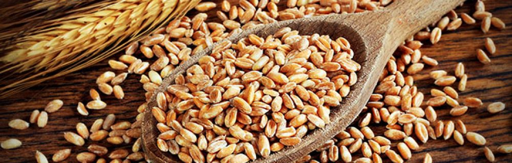 Is a Gluten-Free Diet a Good Choice?