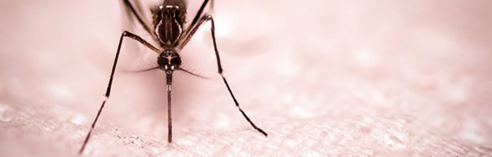 Preventing Zika Infection Where You Live